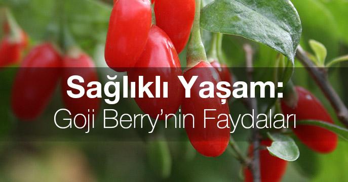 Sağlıklı Yaşam: Goji Berry'nin Faydaları